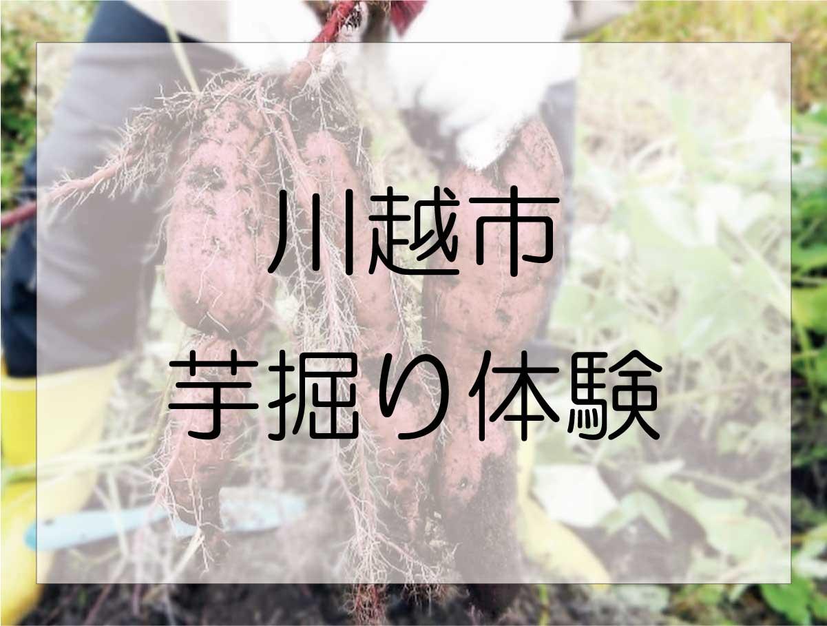 川越市で芋掘り(さつまいも掘り)体験ができる農園はこの5つ