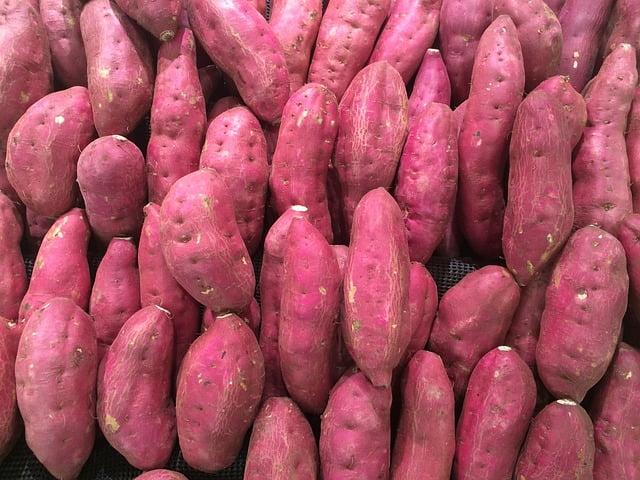 川越市の芋ほりのシーズン