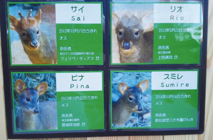 日本で初公開された4頭のプーズー