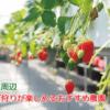 坂戸市周辺のイチゴ狩りスポット