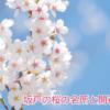 坂戸の桜の名所と開花時期
