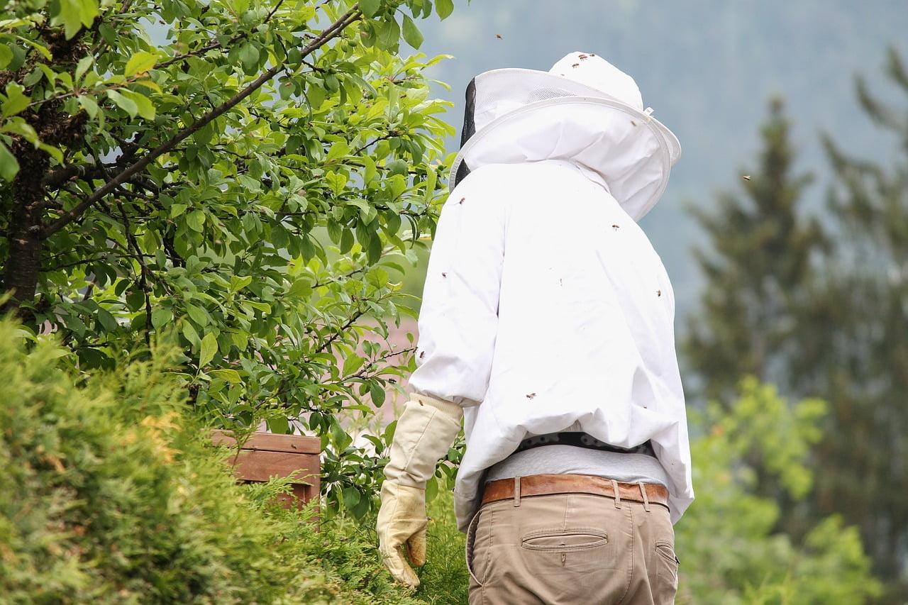 坂戸市の蜂の巣の駆除方法
