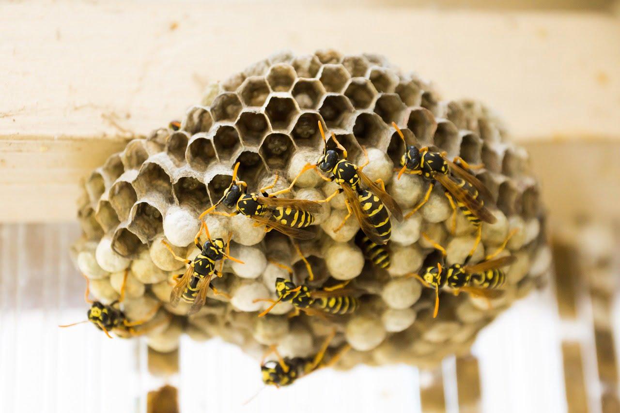 坂戸市で蜂の巣ができやすい場所