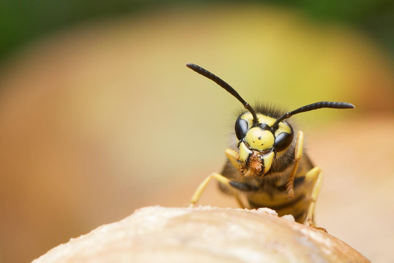 坂戸市内でハチや蜂の巣を発見したときの駆除方法