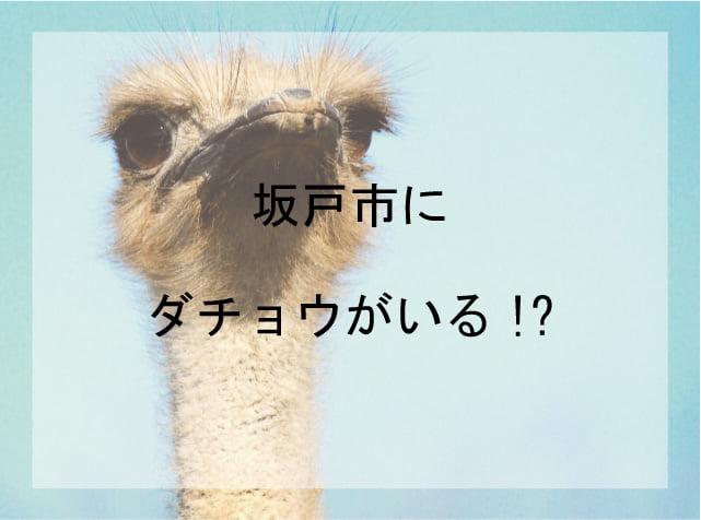 埼玉県坂戸市にはダチョウがいるよ!どこで見れる?